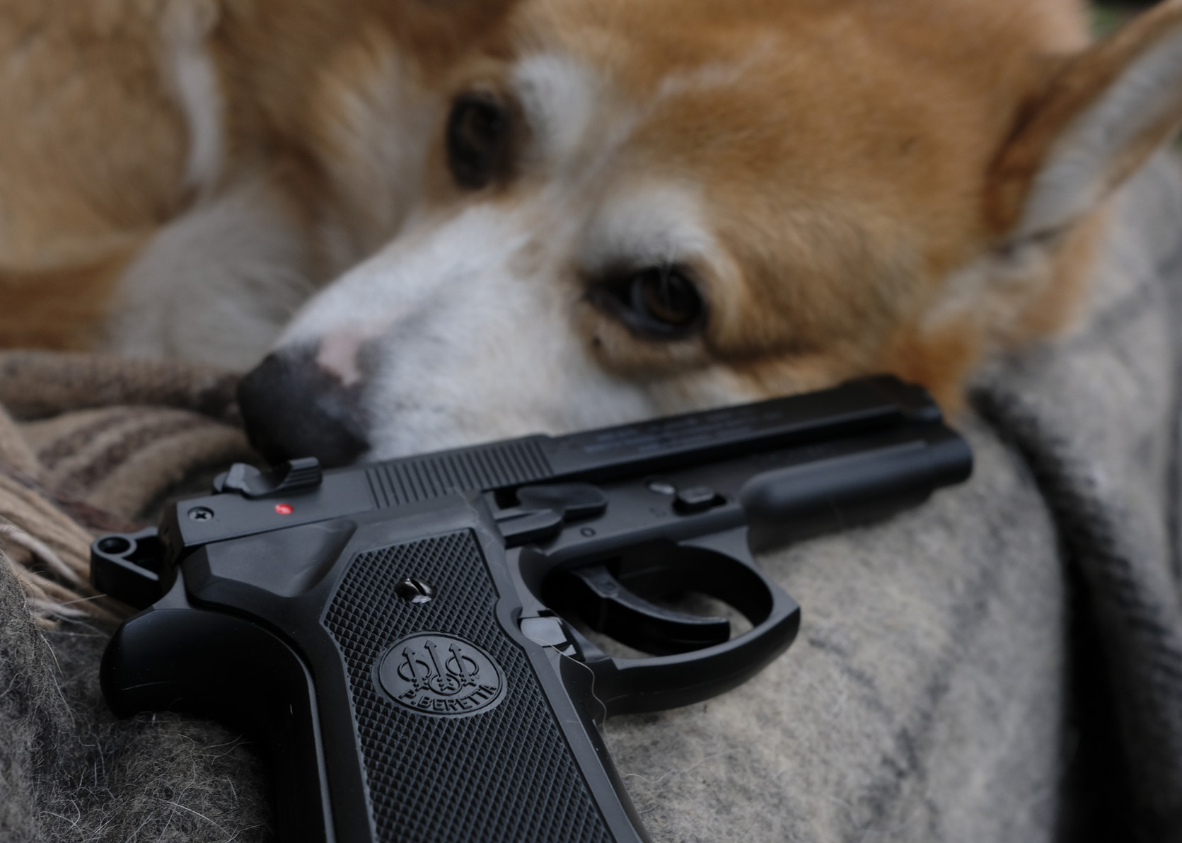 A dog with Beretta M9